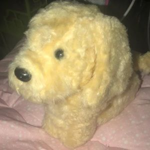 AGD dog- honey